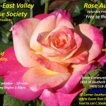 Rose Auction! February 7th! Woo Hoo!
