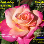 Rose Auction 2017